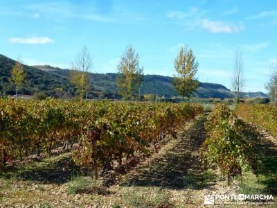 Visita enológica a la Ribera de Duero;murcia senderismo rutas por asturias senderismo canarias